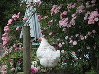 CRITTER Yard Birds