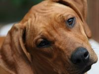1000+ images about Dog...