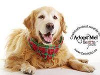 Adopt and Save a Life