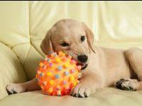 Juega con los Juguetes ! / tienda para #mascotas tenemos todo tipo de #juguetes para #perros #gatos #roedores #pajaros. #animales #naturaleza #bienestar En www.tiendaonlineparaanimales.com