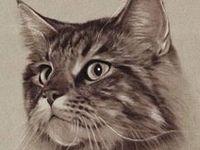 Sobre Mascotas, dibujos, pinturas, información, cartles, accesorios, etc