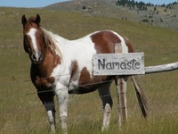41 best yoga for equestrians images on pinterest