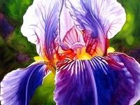 FLOWERS...MOST BEAUTIFUL FLOWERS