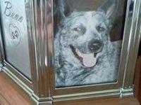Australian Cattle Dogs...and in memory of my beloved Blue Heeler Bevo...