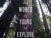 Forests & the life within