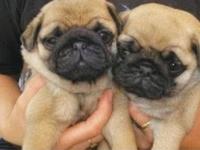 Animals & Cute Pets*