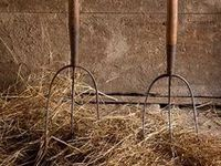 rural: in or of the countryside.                                 farmland / traditions / animals
