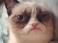 The grumpiest cat on Pinterest. Please feel free to pin and/or like any or all you want!