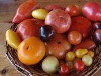 "legumes""vegetable plantes"