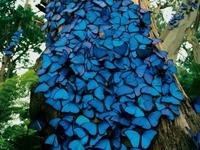 Butterflies  *♥ ✿⊱╮♥❤♥