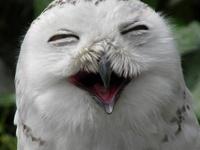 Owls  .*♥.:·