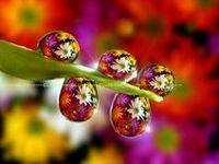 Drops  .·:*¨¨*:·★