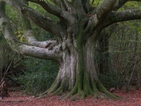Trees; they shelter, they cool, they breathe, they provide. Many have been alive for hundreds, even thousands of years. Beautiful and taken for granted, trees are the soul of the planet.