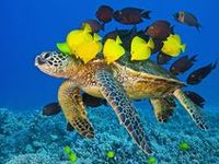 Water Wildlife-Ocean/Lake/River Creatures, Mammals and shore birds and anything that lives on, in or near the water.