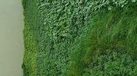 Garden Wandsworth
