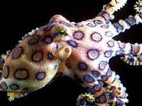 Octopus Magnificent Creatures