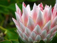 Gorgeous Gardens 'n Random Flowers