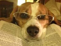 Everyone loves a good book.