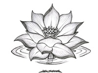 16 best images about lotus flower bomb on pinterest back for Lotus flower bomb tattoo