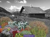 17 Best Images About High Altitude Plants On Pinterest
