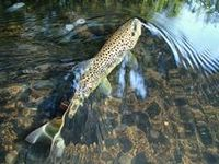 Fave Fishing Photos from September 2015 / Our top ten #fishing & #flyfishing photos from the month of September!