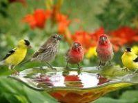 BIRD ~ BIRD ~ BIRD