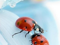 Love the Ladybugs!!
