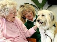 Pet Therapy in Action