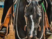 American Quarter Horse Association proud member