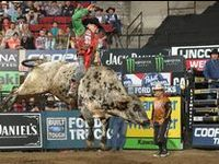PBR, NFR, CBR, PRCA, Wranglers, Bulls, Broncs, Ropin, Reining, Barrel Racing, Mutton Bustin, Steer Wrestlin, Cowboys, and all things Rodeo!