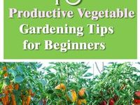 Garden LHG / Garden tips, tricks and information.  If you would like to join this board please join this Facebook group for instructions: https://www.facebook.com/groups/pinterestgroupboardslynne/