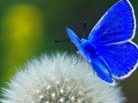 Butterflies, Moths, Dragonflies