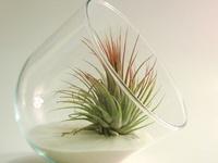 Weird Plants, Succulent and Cactus Plants