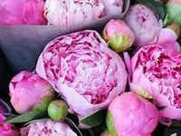 Flowers and plants that I love - especially white tulips, ranunculus, hydrangea, and peonies.
