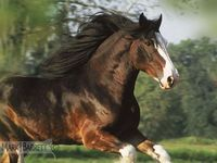 1000 images about draft horses pictures on pinterest