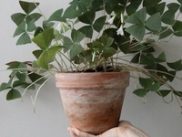 planten | bloemen