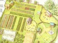 homesteading/farming/self sustainable