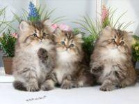 Fantastic Felines (Big & Small)