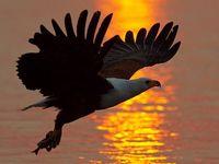 Birds- breathtaking photos