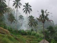 my bali - i miss you / i used to live in Bali ...