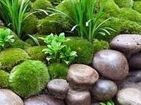 Moss gardening, see also 'Stunning stone'