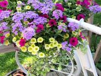 Daisy, Daisy, give me your answer do, are you happy growing on a bike that's not brand new?