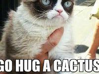 59 best ideas about Grumpy Cat on Pinterest | Grumpy cat ...