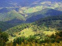 Allegheny/Blue Ridge/Appalachia
