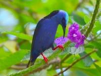 Birds / Some of my best bird photographs, taken with Nikon P90 and Nikon D7000 Sigma 150-500mm