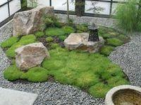 backyards, patios & plants