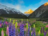 New Zealand / Discover the magic of New Zealand!