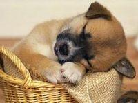 Puppy Naptime