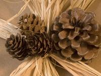 Pine Cone Inspirations