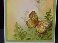 Cards Samples - Butterflies